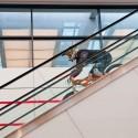 Eskalátory jsou jedním z hlavních adrenalinových prvků celého downmallu