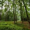 """""""Barumka"""" se již tradičně jede mimo jiné i v krasném prostředí lesů nad Zlínem"""