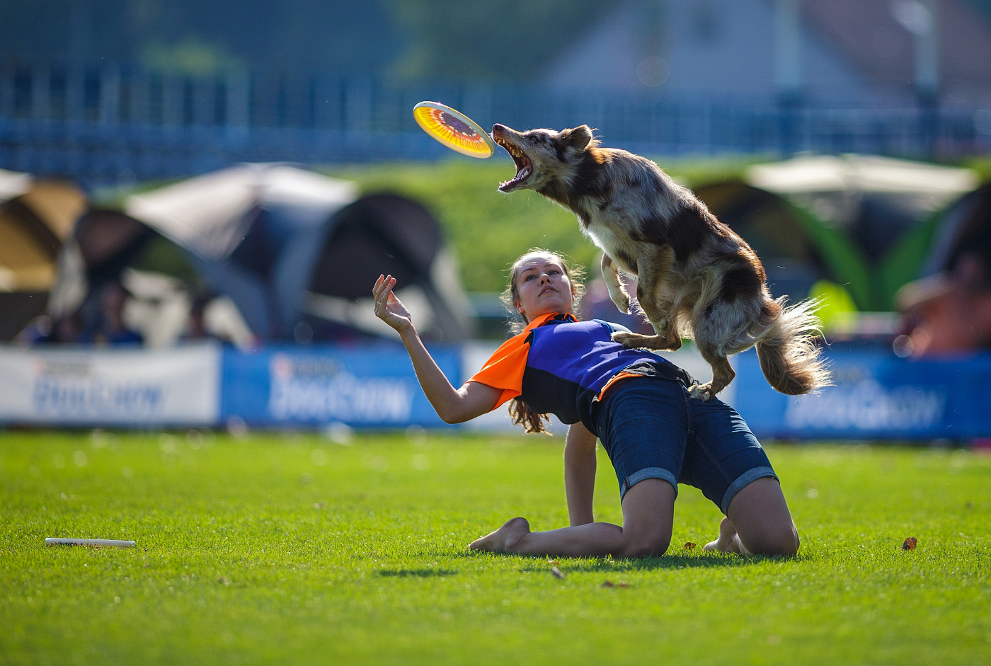 dogfrisbee2016_01