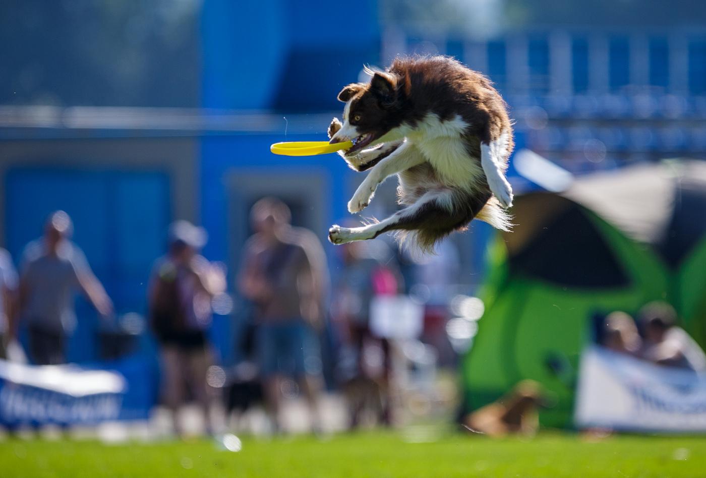 dogfrisbee2016_02