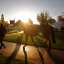 Ráno při veterinární přejímce koní je ještě na trávě rosa. (syn)