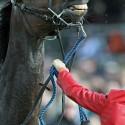 Koně se někdy plaší. A někdy i koušou. (syn)