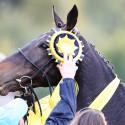 122. VPCP 2012 (syn), vítězný kůň 122. VPCP Orphee des Blins (FRA) a dekorování vítěze