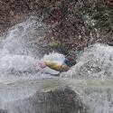 Rochnění se v planktonu. Turman 2012 (syn)