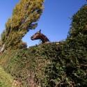 123. Velká pardubická steeplechase (can)